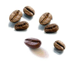 Cuban Coffee Bean